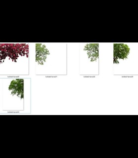 Downloads Library-photoshop library-Landscape-Others--745